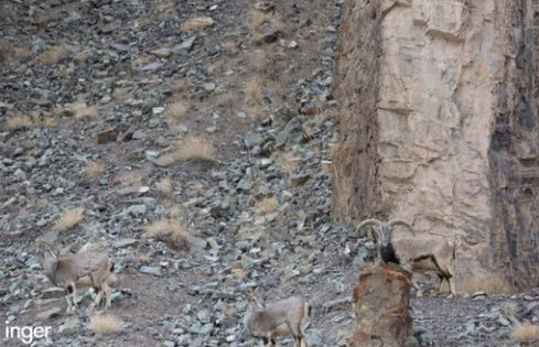 Finde den Leoparden auf dem Bild