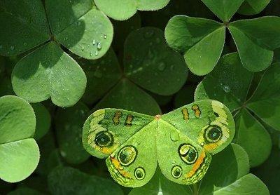 Finde einen Schmetterling