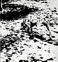 Siehst du einen Hund