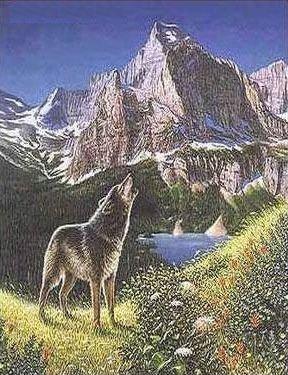 Finde 5 Wölfe
