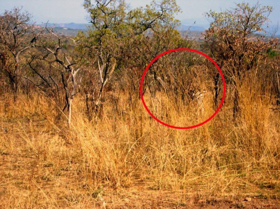 Siehst du ein Tier auf diesem Bild? 2
