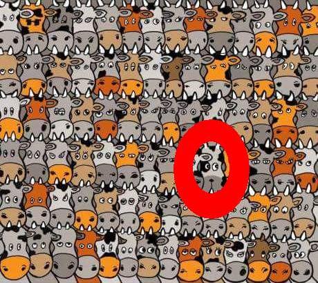 Finde den Hund unter den Kühen 2